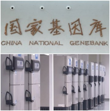 A glimpse of the new China National GeneBank