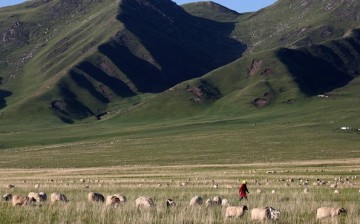 Among other things, the program helped improve the quality of Tibetan grasslands.