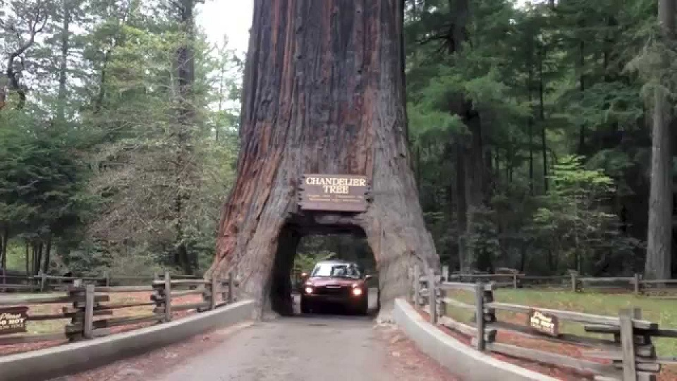 Tallest Trees In California Redwood Forest 777 Years Old Ha