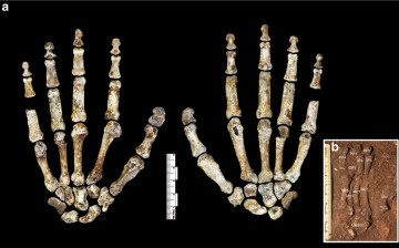 Homo naledi's hands and feet bones had similar features with modern humans too.
