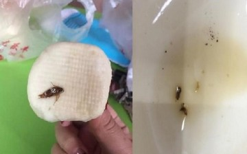 A cockroach in a steamed bun and two aphids from a vinegar container as captured by two separate customers in two different branches of Qingfeng.