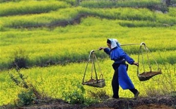 Chinese scientists found that farmers had overused phosphorus in 2012, averaging 80 kg of phosphorus per hectare for crop production, far higher than the average level among developed countries.
