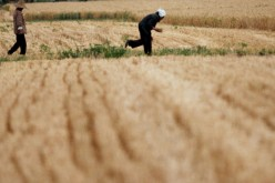 One-fifth of China's arable land is polluted.