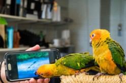 Parrot Video Games