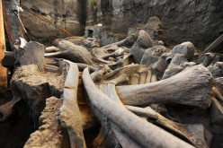 The mammoth skeleton was discovered last December in the central Mexican municipality of Tultepec.