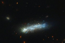 In this new image from the NASA/ESA Hubble Space Telescope, a firestorm of star birth is lighting up one end of the diminutive galaxy LEDA 36252 — also known as Kiso 5649.