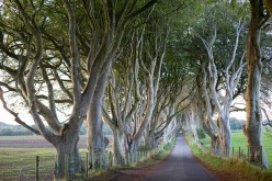 The Dark Hedges, located in Belfast, Northern, Ireland is one of the most iconic locations in