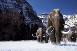 The last woolly mammoth populations existed some 5,600 years ago.