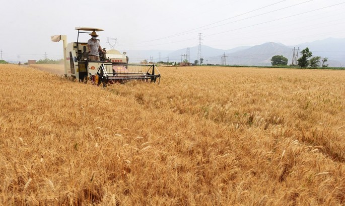 A farmer harvests wheat in Yanguoxia Town of Yongjing County in Linxia Hui Autonomous Prefecture.