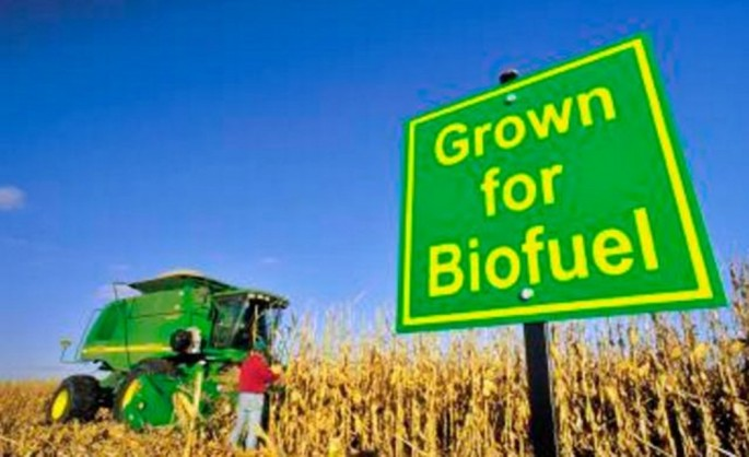 Biofuel crop in the United States.