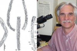 Baracktrema obamai from black marsh turtle and (right) Dr. Thomas Platt who named this flatworm after Pres. Obama.