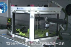 Lettuce grows in the Tiangong-2 space lab.