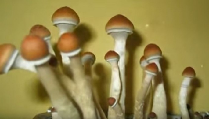 Psychedelic Science: Magic Mushrooms