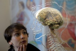 A real human brain being displayed as part of new exhibition at the @Bristol attraction