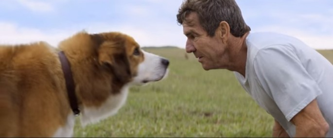 "Producers of family movie ""A Dog's Purpose"" cancel US premiere and publicity events amid controversy on maltreatment of a dog on set."