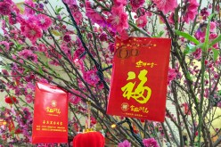 Red envelopes hanging on a peach tree as decoration in Foshan, Guangdong Province.