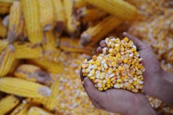 China is currently looking for ways to deal with its massive corn surplus.