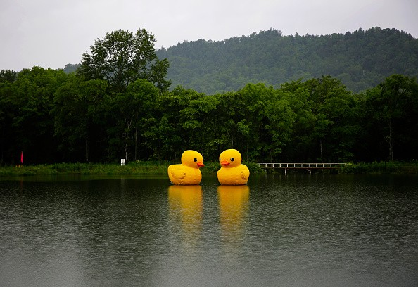 Two scaled replicas of the rubber duck by Dutch conceptual artist Florentijn Hofman are seen floating in a lake at a national park.