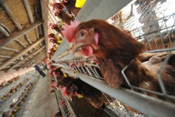 Over 100 cases of bird flu have been reported in China since late last year.