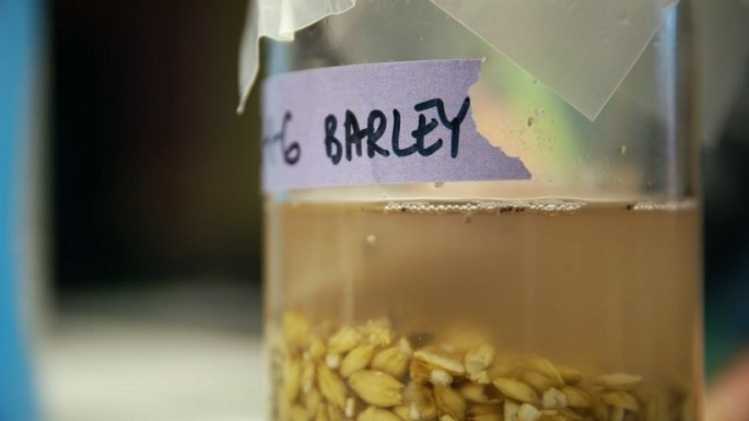 One intriguing factor regarding the experiment is its inclusion of barley--an ingredient that did not flourish as a food staple in China at the time the recipe was made until much later.