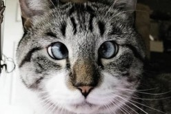 Good news, Cat ownership not linked to schizophrenia, other mental disorders; Scientific benefits of owning a cat