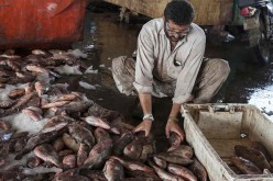 Pakistani fishermen are now selling fish to China, thanks to the new Silk Road.