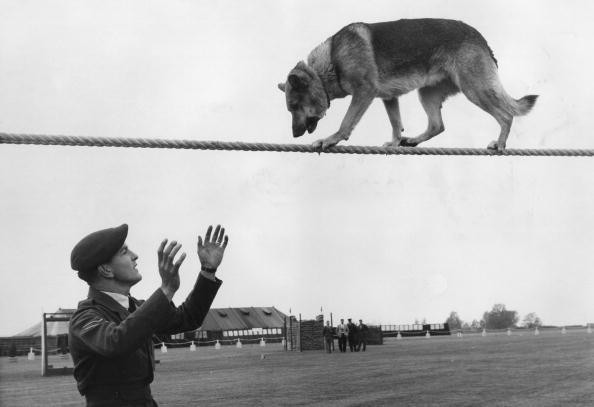 Police Dog Trials