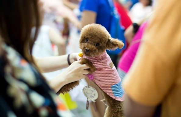China's Pet Fashion Industry