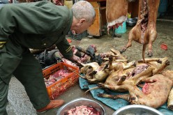 Dog and Cat Meat Banned in Taiwan
