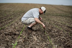 U.S. Farmers File Cases Against Syngenta