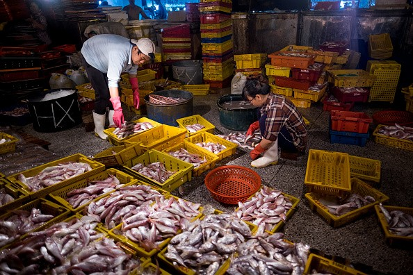Vietnamese fishermen continue to fish in the South China Sea amid China's ban.