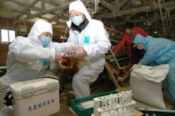 The H5N6 avian flu strain was once believed to be isolated to wild ducks and waterfowls.