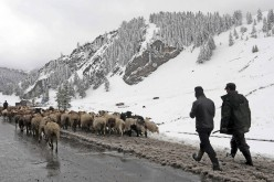 Herders transfer their goats to a warmer pasturing area after heavy snowfall hit Hami, Xinjiang Uyghur Autonomous Region, Sept. 12, 2014.