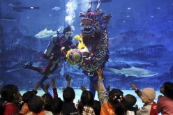 Visitors will be delighted with Beijing Aquarium's underwater dragon dance, which will be the highlight of the aquarium's Spring Festival show.