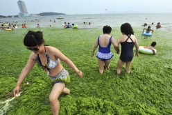 Residents walk amid the algae-filled coastline of Huang Xiaoming's hometown of Qingdao in 2011.