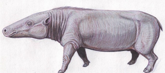 Anthracotherium magnum, the ancestor of today's hippos.