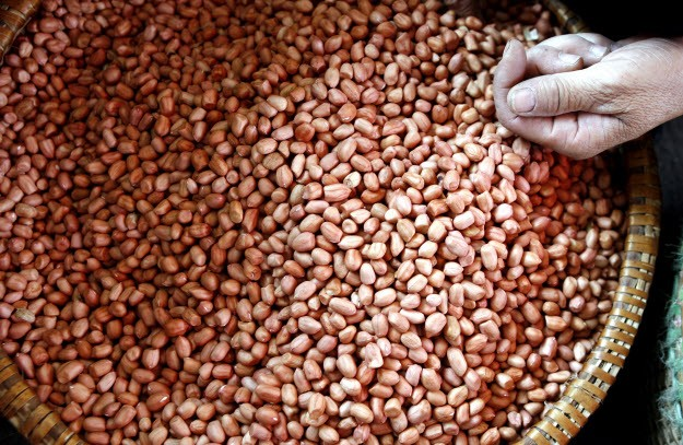 Moderate consumption of nuts, including peanuts, is good for the health.