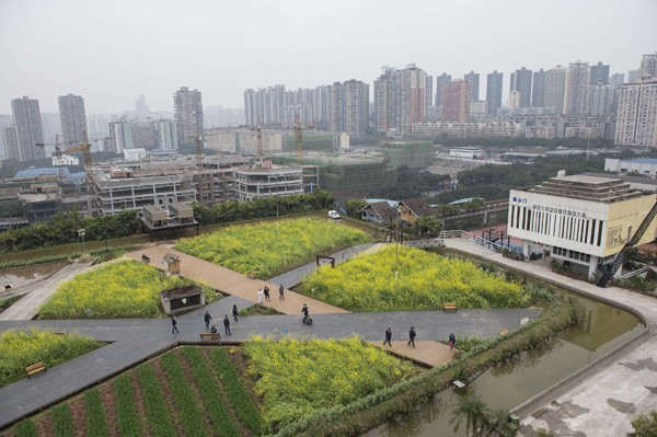 "Buildings in Chinese cities flaunt ""greened"" rooftops."