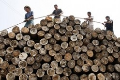 Laborers tie a rope to pile logs at a timber market in Huaibei, Anhui Province.