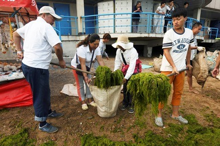 Volunteers remove algae from the coastline of Qingdao in Shandong Province last year.