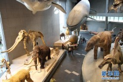 The photo taken on April 17, 2015, shows the exhibits in the Shanghai Natural Museum.