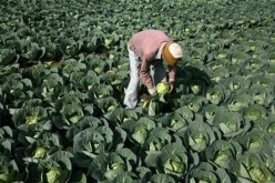 Farmers in rural areas stand to benefit from broadband access as e-commerce will allow them to better sell their crops.