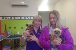 Johnyy Depp's Pet Dogs, Pistol And Boo At The Gold Coast Grooming Salon