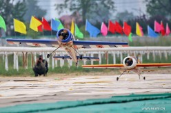 A formation of two aircraft models perform during the 2015 China Aeromodelling Design Championships in Yantai, east China's Shandong Province, May 30, 2015. Over 300 competitors from more than 20 teams took part in the five-day competition which kicked of