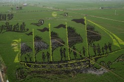 A 3D image on a rice paddy in Xibo town, Shenyang, Liaoning Province.