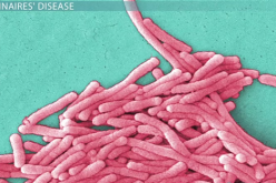 The Legionella bacteria are the cause of the Legionnaires' disease that killed 2  people in New York City