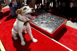 Canine star Uggie  of 'The Artist' passes away