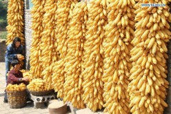 Corn production has increased in China, causing prices to go down.