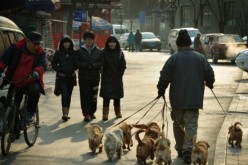 Among pet animals, dogs are popular among pet owners, accounting for 62 percent of the total pet population in China.