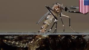 Genetically Modified Mosquitoes Can Stop Malaria Spread In Humans: Science